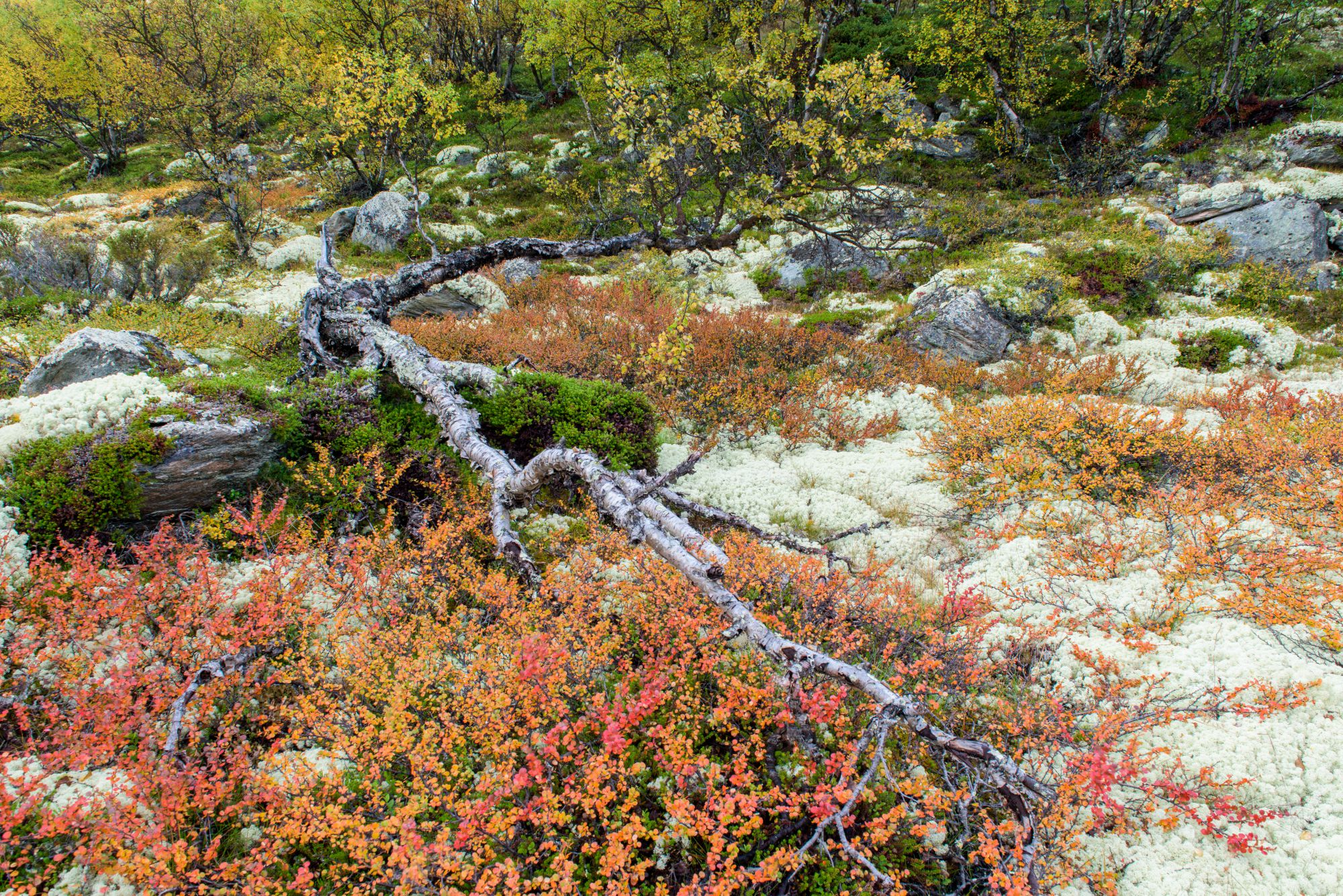 Colourful vegetation in Rondane
