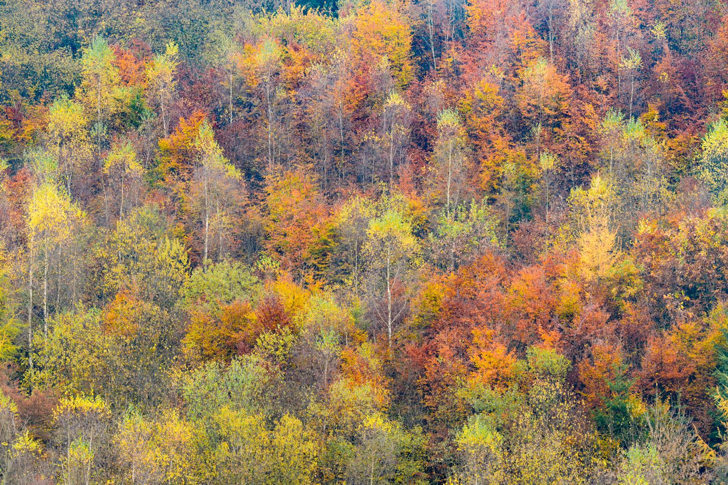 Colourful treetops