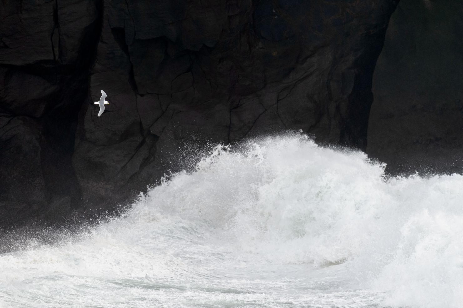 Kittiwake on a stormy sea