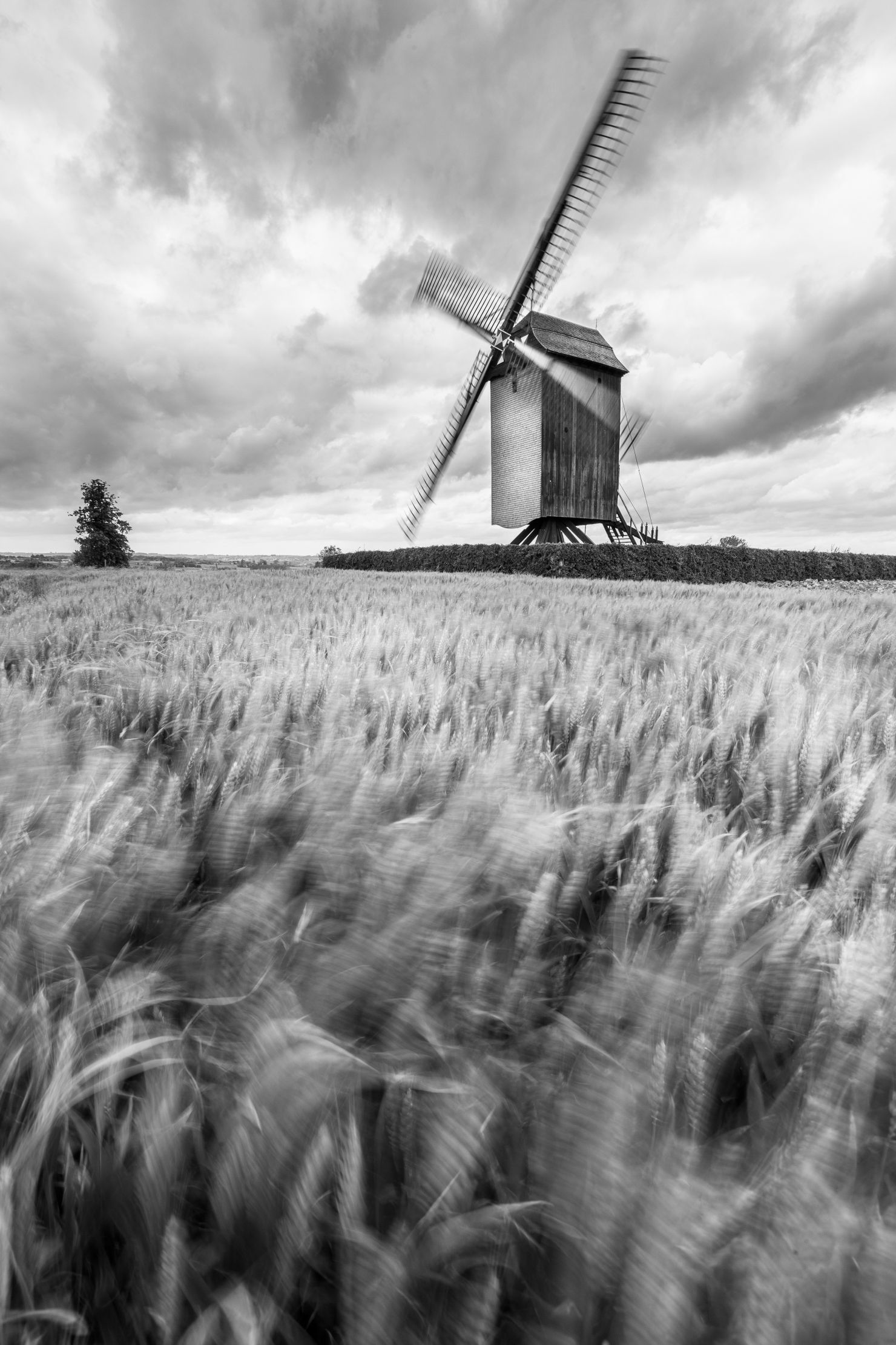 Mill in a field of wheat