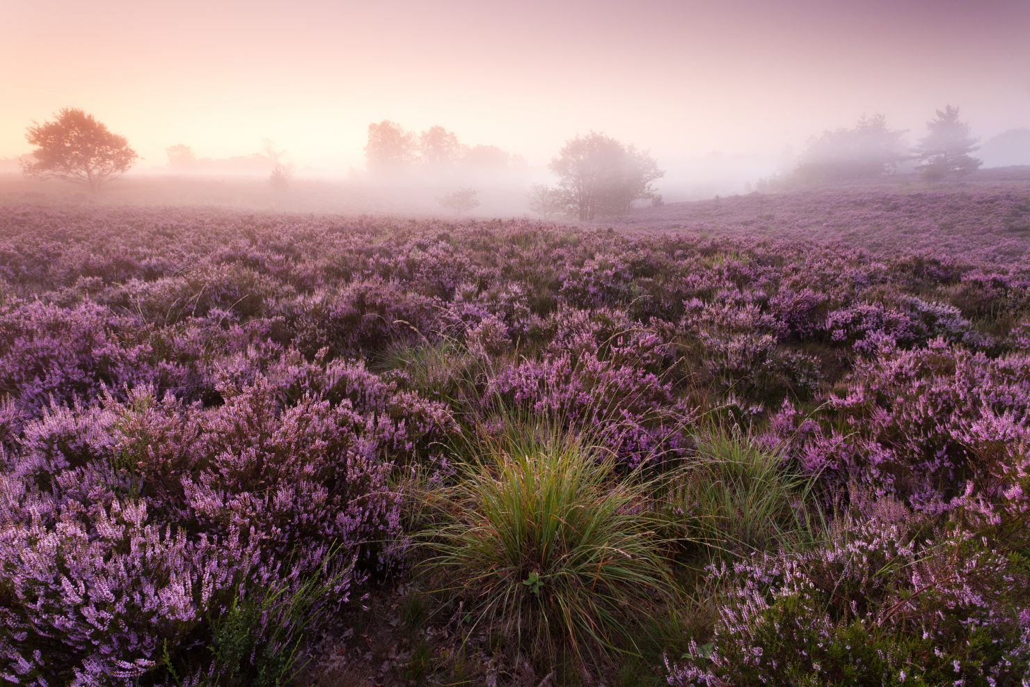 Mechelse heide at sunrise